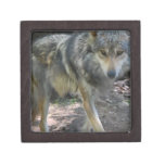 Prowling Wolf Small Gift Box