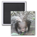 Quilled Porcupine Magnet