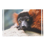 Resting Red Ruffed Lemur Placemat