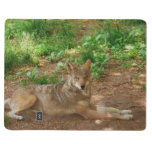Resting Red Wolf Journal