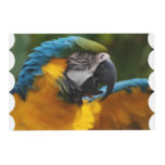 Ruffled Blue and Gold Macaw Placemat