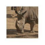 Rutting Rhino Wood Wall Art
