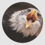Screaming Eagle Sticker