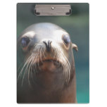 Sea Lion with Whiskers Clipboard