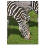Seeing Double Zebras Clipboard