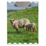 Sheep Family Clipboard