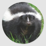 Skunk Photo Sticker