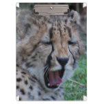 Sleepy Cheetah Cub Clipboard