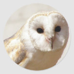 Snowy Barn Owl  Stickers