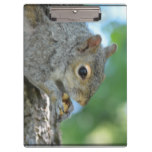 Squirrel Hanging in A Tree Clipboard