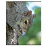 Squirrel Hanging in A Tree Plaque