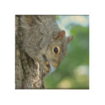 Squirrel Hanging in A Tree Wood Wall Decor