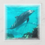 Swimming Dolphin Invitation