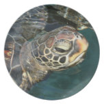 Swimming Turtle Plate