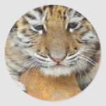Tiger Cub Sticker