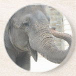 Trumpeting Elephant Coasters