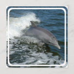 Wild Dolphin Invitation