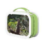 Wild Meerkat Lunch Box