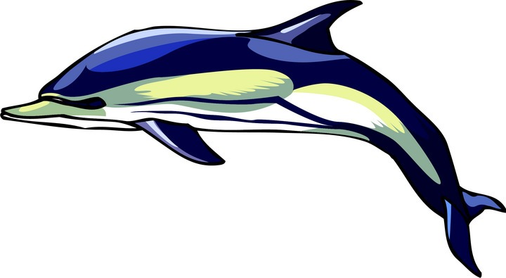 Animals That Swim Clip Art Free dolphin clipart