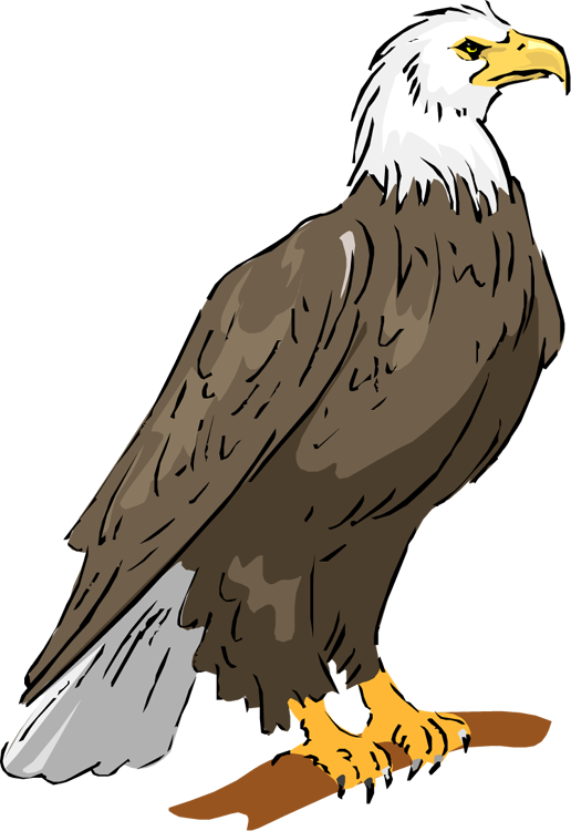 free eagle clipart clip art of eagles landing clip art of eagles soaring