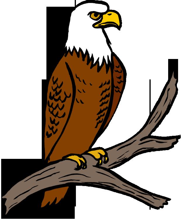 free bald eagle clipart - photo #17