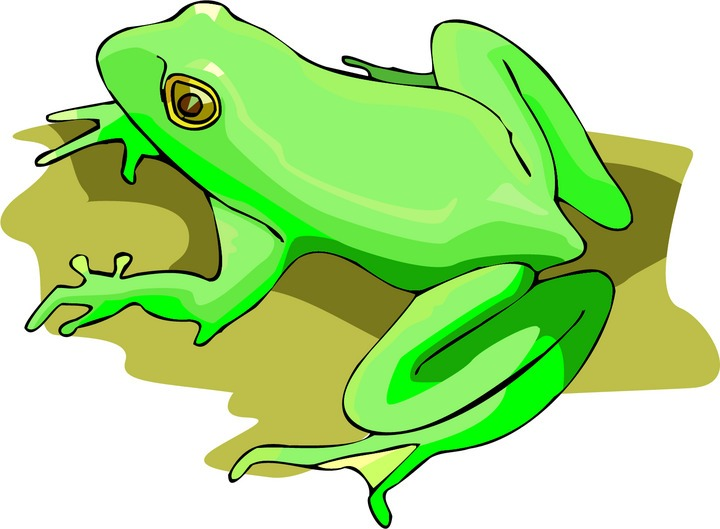 green frog clipart - photo #39