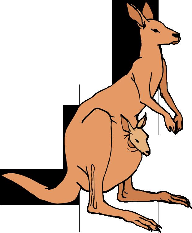 Free Kangaroo Clipart