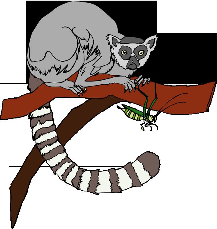 free lemur clipart Lemur Vector lemer clip art