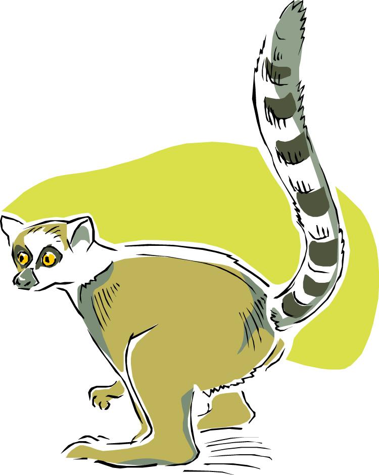 free lemur clipart Clip Art Black and White Lemur lemer clip art