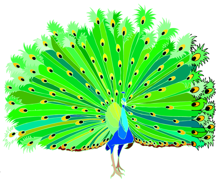 clipart pictures peacock - photo #17