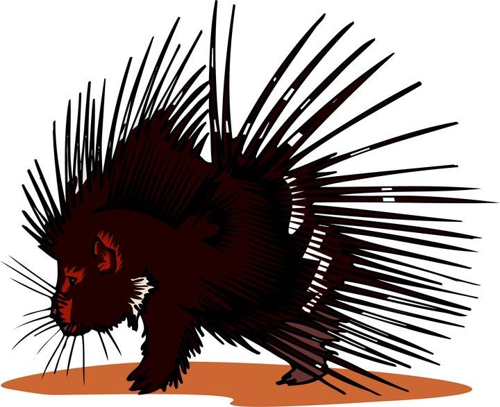 free porcupine clipart rh wildlife animals com baby porcupine clipart porcupine image clipart