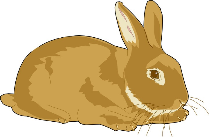Rabbit clipart - photo#6