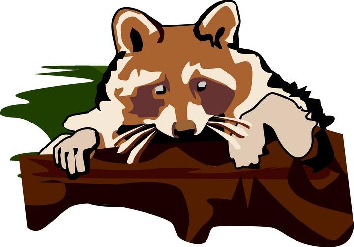 Free Raccoon Clipart Raccoon Face Clip Art