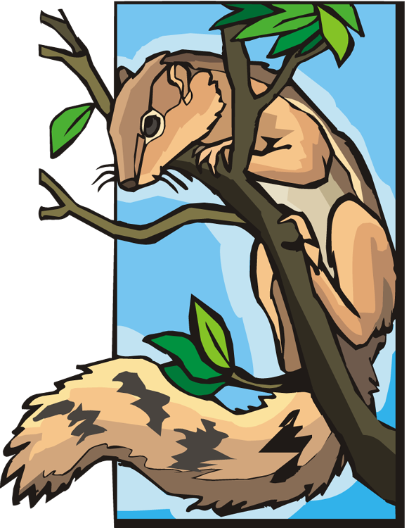 squirrel on tree clipart
