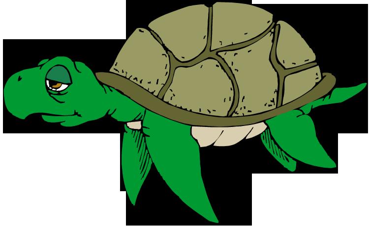 free turtle clipart rh wildlife animals com clip art turtle pictures clip art turtles free