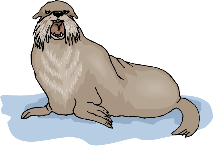 free walrus clipart walrus clipart black and white walrus clipart for polar vbs