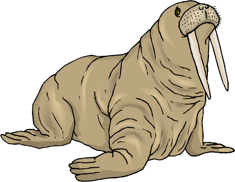 free walrus clipart walrus clip art black and white walrus clipart swimming