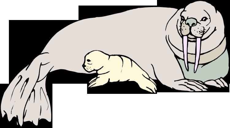 Clip Art Walrus Clipart free walrus clipart baby