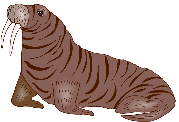 Free Walrus Clipart