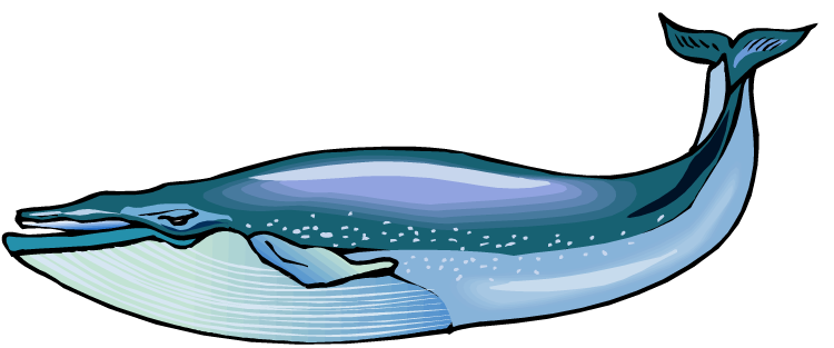 free whale clipart free whale clipart download jpg free printable whale clipart