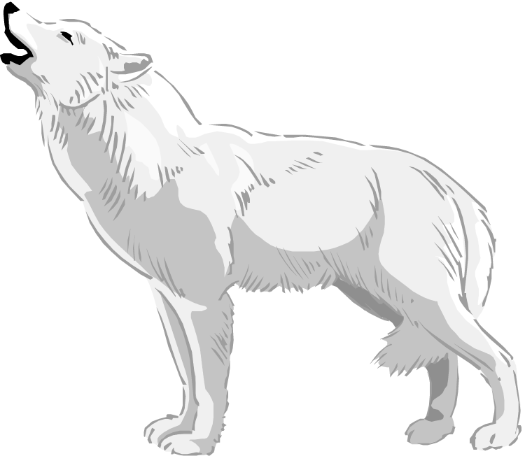 arctic wolf clipart