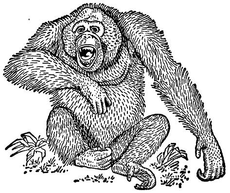 Free Ape Coloring Pages