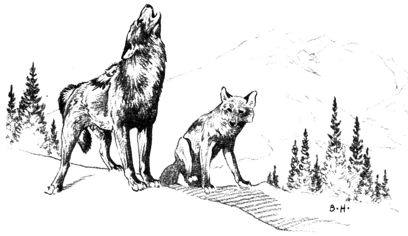 coyote pictures coloring pages - photo#35