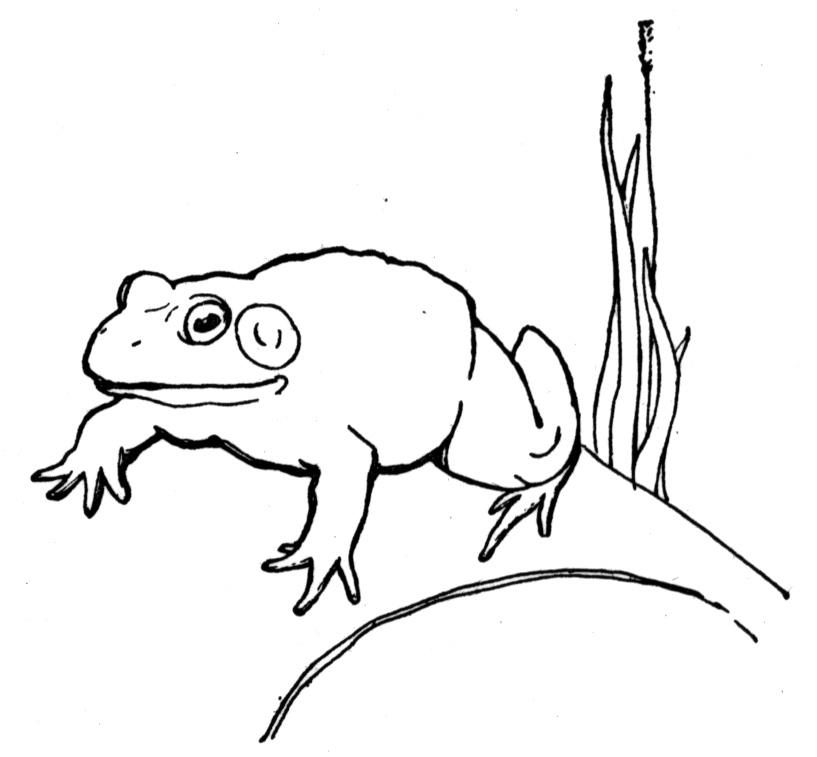 dark frog coloring pages - photo#40