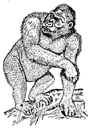 silverback gorilla coloring pages - photo#13