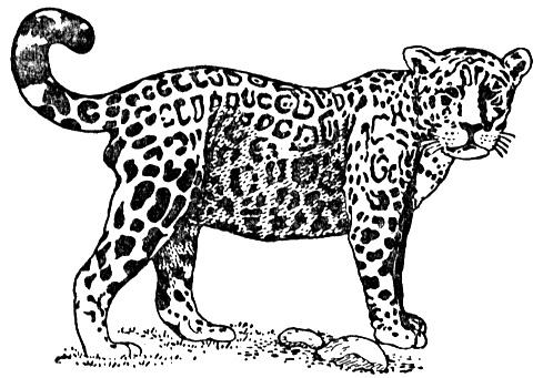 coloring pages jaguars - photo#21