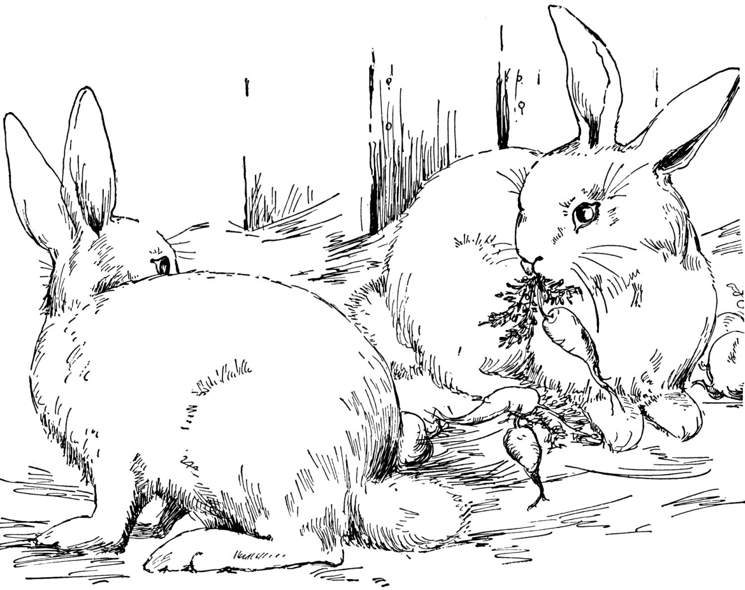 free rabbit coloring pages - Rabbit Coloring Pages
