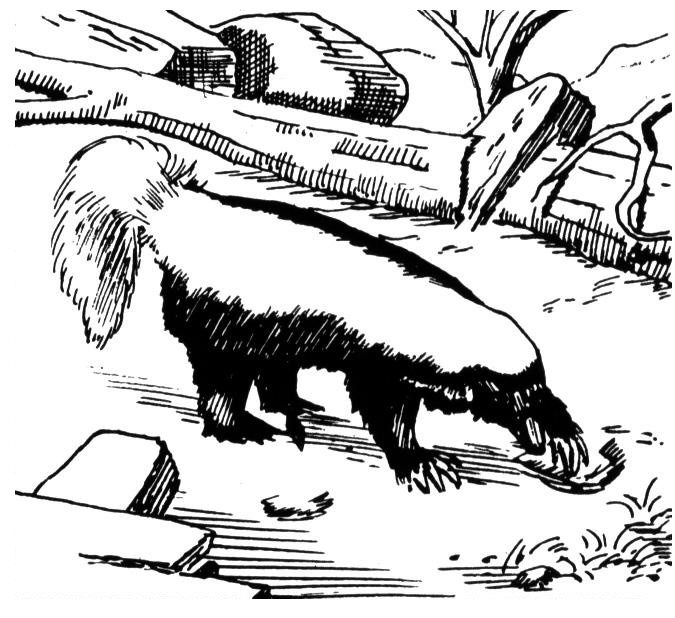 Free Skunk Coloring Pages