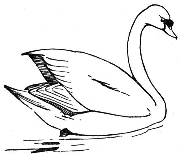 free swan coloring pages - photo#3