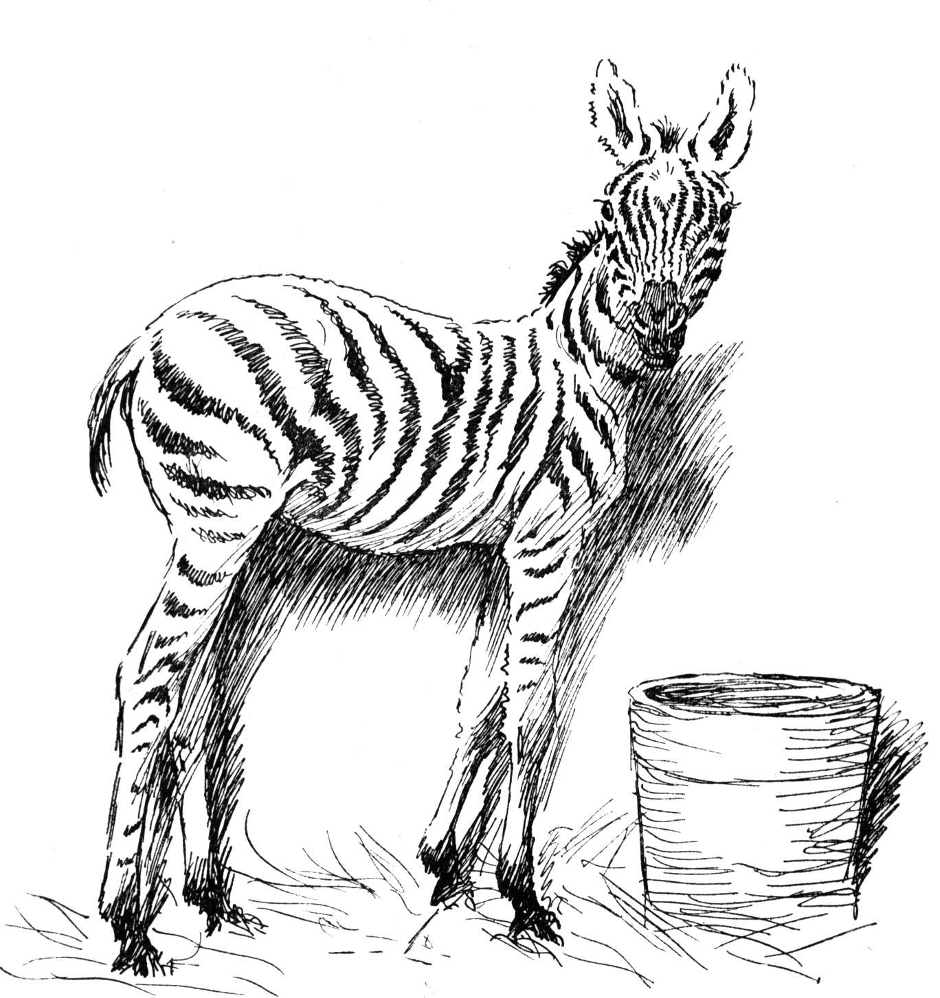 Free coloring pages of zebra stripe for Zebra without stripes coloring page